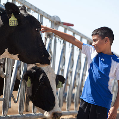 See How Dairy Goes From Farm to Table