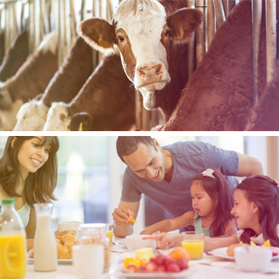 Dairy as a Driver of the Sustainable Development Goals